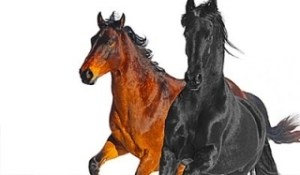Instrumental: Lil Nas X - Old Town Road (I Got The Horses In The Back) (Remix) Ft. Billy Ray Cyrus (Courtesy of Wxsterr)
